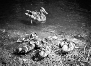 Leica M Monochrom | Leica Summilux-M 50mm f/1.4 ASPH. | ISO 400