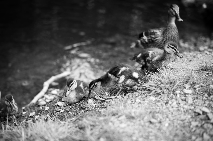 Leica M Monochrom | Leica Summilux-M 50mm f/1.4 ASPH. | ISO 320