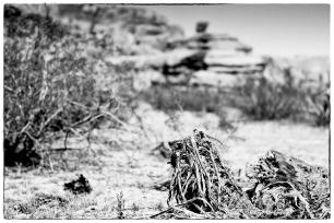 Joshua Tree National Park | Leica M Monochrom (Typ 246) | Leica Summicron-M 35mm f/2 ASPH.